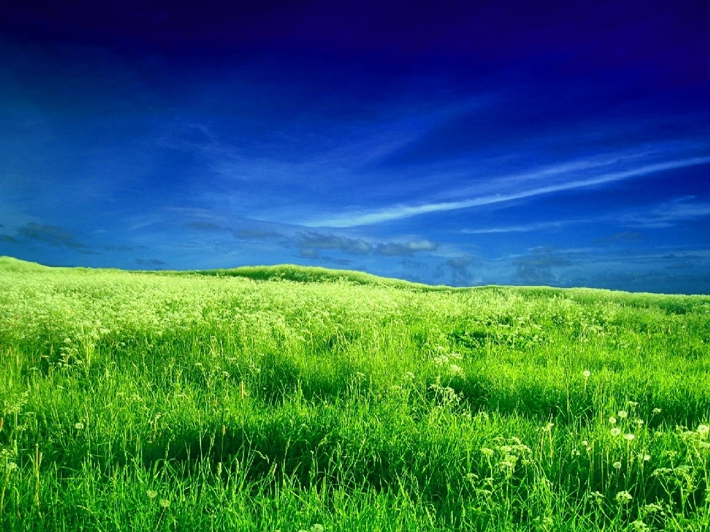 1024x768 zeeland field desktop pc and mac wallpaper